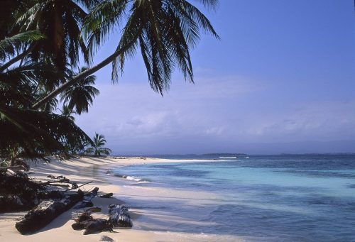 A landscape photo of a tropical island taken in the Guna Yala region of Panama. The upper left side of the image shows dark green palm trees leaning to the right over the beach and ocean. In the lower left we see several waterlogged logs that have drifted ashore onto the beige sand. The beach arcs away from the lens in a crescent, forming a light-teal colored bay in the center of the photo. Deeper shades of teal are seen on the right side of the photo as the shallow bay falls into the depths of the Caribbean Ocean. On the horizon we see a band of white clouds, with blue sky overhead.