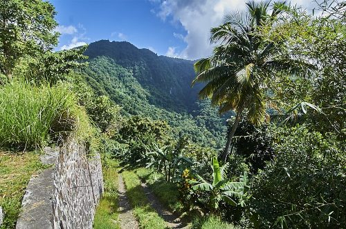This portrait landscape photo is taken from the ridge of a steep mountainside on the island of St. Lucia in the Caribbean. A stone wall on the left side of the image, which is perpendicular to the camera, follows a two-track road, just below it, off into the distance. Bright green grass in the middle and on both sides of the two-track, provides a series of stripes in the foreground. The mountainside disappears down to the right through palm trees and jungle foliage. About half a mile away another mountain peaks in front of a bright blue sky. In addition to the blue sky and gray stone wall, there are 100 different shades of green throughout the photo, ranging from grass green to dark teal on the distant mountain, which is partially darkened by an overhead cloud.