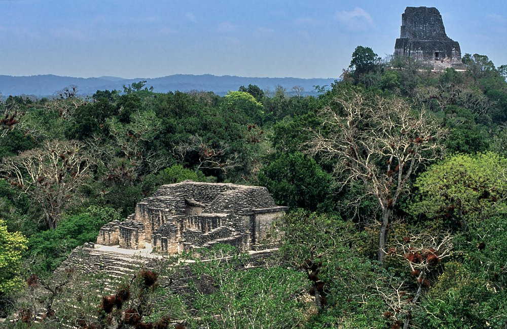 This landscape photo taken in Tikal, Guatemala, looks over the top of a jungle canopy in the lower 2/3s of the image, its colors ranging from bright lime to deep forest green. We look down on the archeological ruins of the Temple of Talud and Tablero in the lower left third of the image, and up to the Temple of the Double Headed Serpent in the upper right corner with its roof comb high above the treeline. A ridge of mountains can be seen on the horizon, several miles distant, with a blue cloudless sky above.