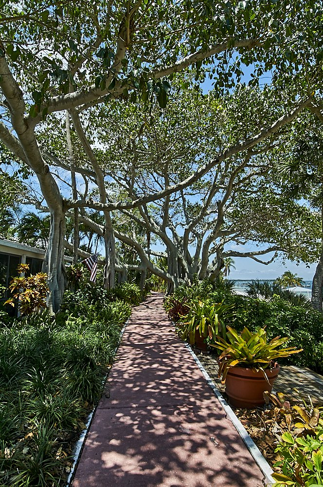 Vertical photo of a pink brick walkway on Useppa Island, Florida. The walkway fills the lower center third of the image and disappears to the horizon in the center. A thick green canopy of deciduous trees extends to the top of the image which covers the walkway and completely fills the top half of the photo. Blue sky appears through the branches and between the leaves. The overhead sun, filtering through the leaves, casts an intricate shadow of branches and leaves onto the pink walkway. To the left and right of the walkway, underneath the shade of branches, strips of green foliage cover the ground in multiple shades of green. In the distance, on the right third of the image at the horizon line, we can see the blue water of Pine Island Sound. The walkway is deserted.